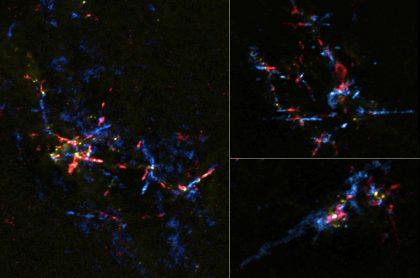銀河中心分子雲帯の赤ちゃん星たち