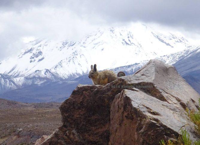 Vizcacha_Mountain_KI.m