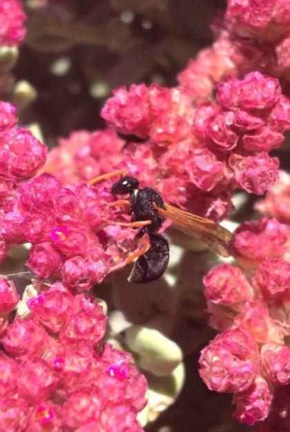 砂漠に咲く花と蜂